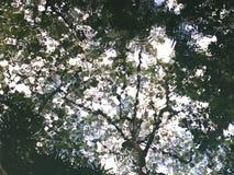 Donkergroen water bokeh in de vijver van het silhouetbezinning van de boomtak royalty-vrije stock afbeeldingen