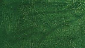 Donkergroene de kleurentextuur van het Ecoleer Stock Fotografie
