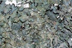 Donkergroene de textuurachtergrond van de mosmicrokosmos stock foto's