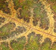 Donkergroene dode bladachtergrond Royalty-vrije Stock Afbeelding