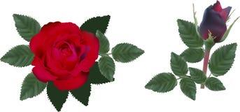 Donkerrode twee rozen met bladeren vector illustratie