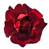 Donkerrood nam toe Royalty-vrije Stock Afbeelding