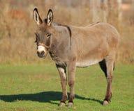 Free Donkey Stock Photos - 10025883