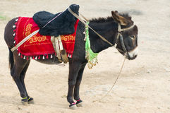 Donkey. A donkey waiting for tourists Royalty Free Stock Photography