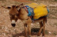 Donkey royalty free stock photos
