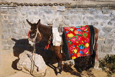 Donkey. It is a cute donkey Royalty Free Stock Images