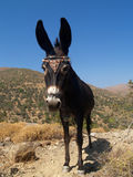 Donkey. Close up of donkey against clear blue sky in mountain of greece Royalty Free Stock Images