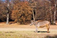 Donkey. Lonely donkey in a autumn landscape Stock Photo