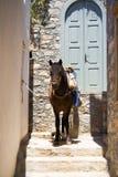 Donkey. At a Greek island, Hydra Stock Image