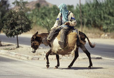 On the donkey. A man  riding a donkeyheavy charged with baskets in Marrakesh, Morocco Royalty Free Stock Photography
