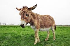 Free Donkey Stock Images - 18486544