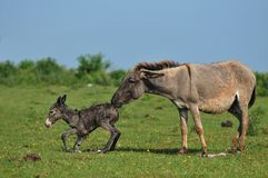 Donkey. Newborn donkey and mother in grass Stock Photo