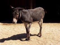 Donkey Royalty Free Stock Photo