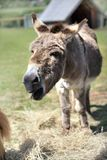 Donkey Stock Photo