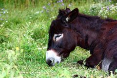 A donkey Stock Photography