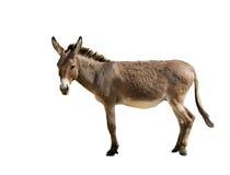 Free Donkey Stock Image - 19838471