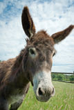 Donkey stock photography
