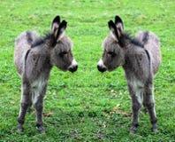 Donkey Stock Images