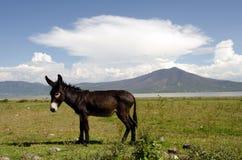 Free Donkey Stock Images - 31734604