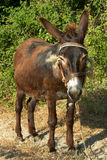 Donkey. A donkey waiting for its master on a country lane in Crete, Greece royalty free stock photos