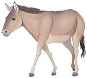 A donkey Royalty Free Stock Photography
