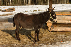 Donkey. Royalty Free Stock Images