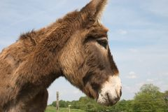 Donkey Royalty Free Stock Photos