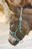 Donkey. 's head captured close-up and from the side stock image