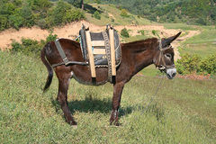Donkey :) Royalty Free Stock Photo