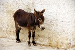 Donkey in front of a wall Stock Photo