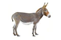 Free Donkey Stock Photos - 65427303