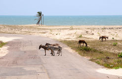 Donkey. Animals crossing a desert route Royalty Free Stock Images
