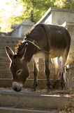 Donkey. Stock Photography