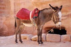 Donkey. In Petra in Jordan Royalty Free Stock Images