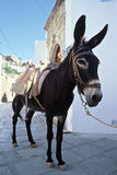 Donkey. On streets of Lindos, Rhodes, Greece Royalty Free Stock Photography