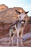 A Donkey Royalty Free Stock Images