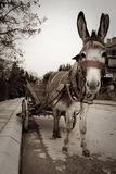 Donkey. With chariot on the street Royalty Free Stock Images