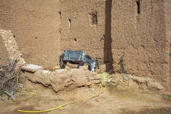Donkey in african village Royalty Free Stock Photos