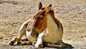 Donkey, Animal, Concerns, Cute Stock Photos