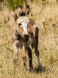 Donkey, Animal, Mammal, Weidetier Stock Photos