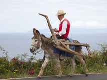 Donkey as a transport agent and draft animals to plow Stock Photography