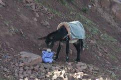 Donkey in the Atlas Mountains Royalty Free Stock Photos