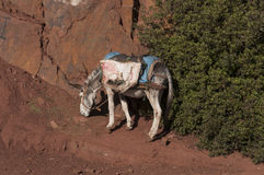 Donkey in the Atlas Mountains Stock Images