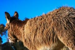 Donkey back Stock Image