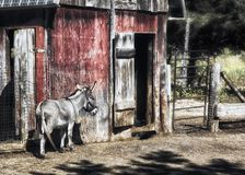 Donkey and Barn Royalty Free Stock Image