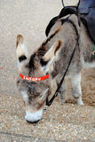 Donkey at Beach Stock Image