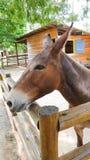 Donkey Behind Fence Stock Image