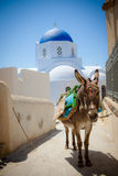 Donkey and Blue Dome Church Royalty Free Stock Image