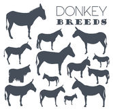 Donkey breeds icon set. Animal farming. Flat design Royalty Free Stock Photos