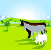Donkey, bull and lamb Royalty Free Stock Image